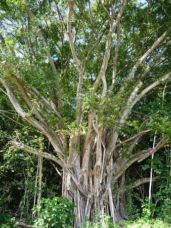 Big Island Hawaii 2009
