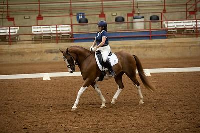 Horse 473