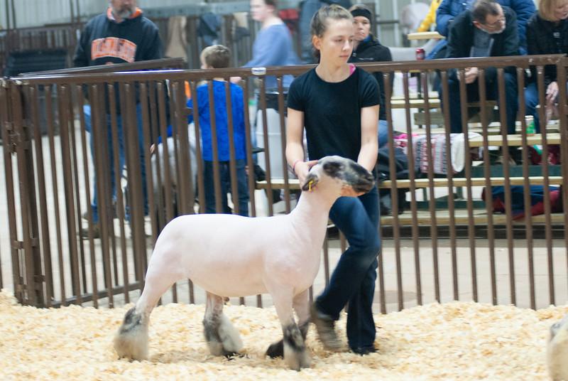kay_county_showdown_sheep_20191207-49.jpg