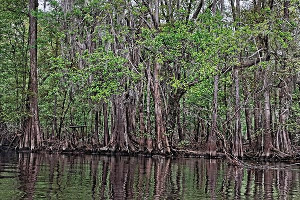 Edisto River Canoe Trip
