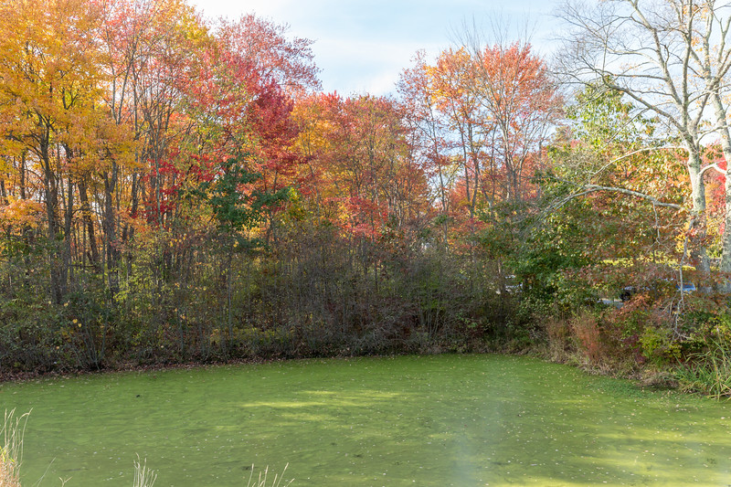 20171022_Apple Picking and other Fun_0072.jpg