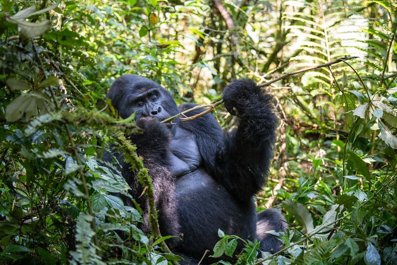 Uganda_T_Gor-439.jpg