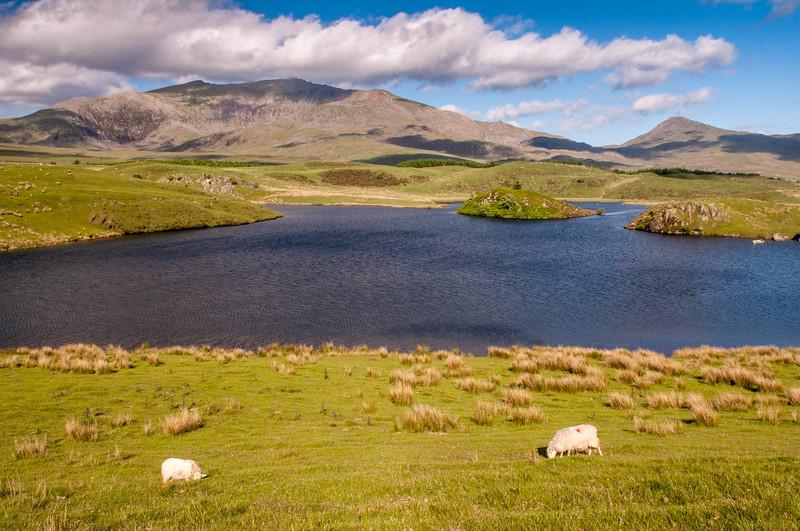Snowdon from Llyn y Dywarchen