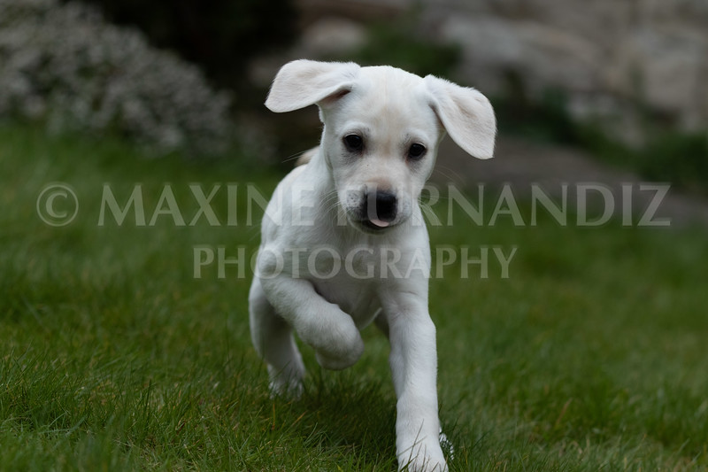 Weika Puppies 24 March 2019-6250.jpg