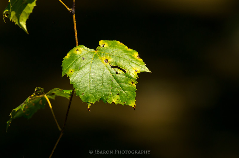 Green Leaf Portrait