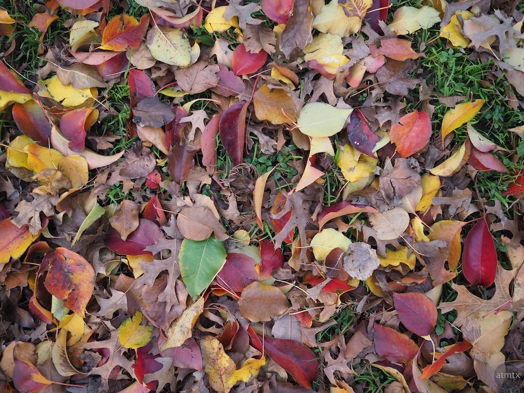 Leaf Assortment - Austin, Texas (standard color)