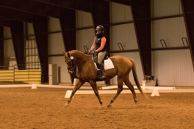 Horse 648