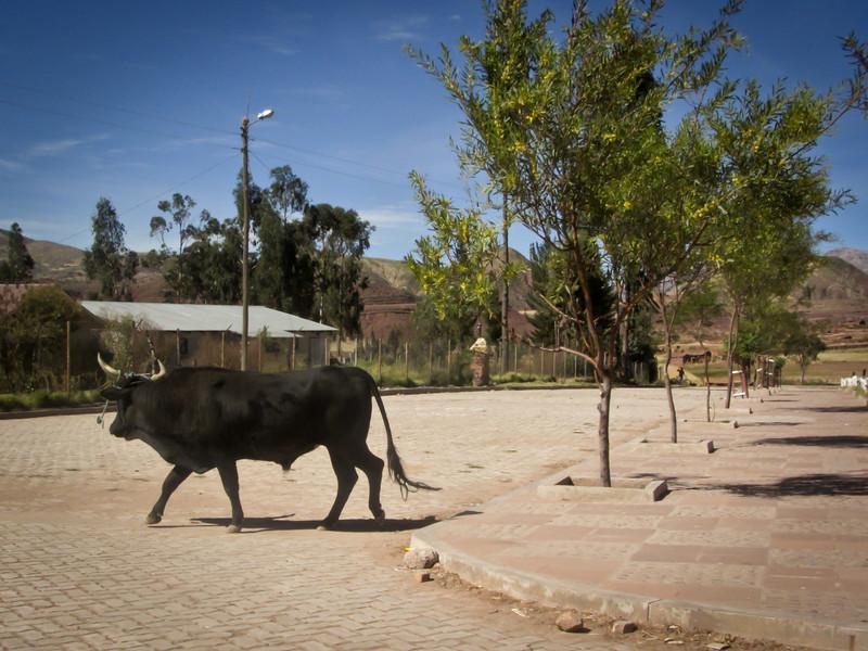 Sucre 201205 Inca Trail Potolo Tour (52k).jpg