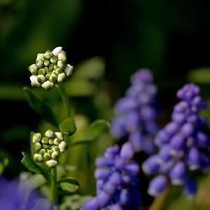 Garden Flowers: 2007