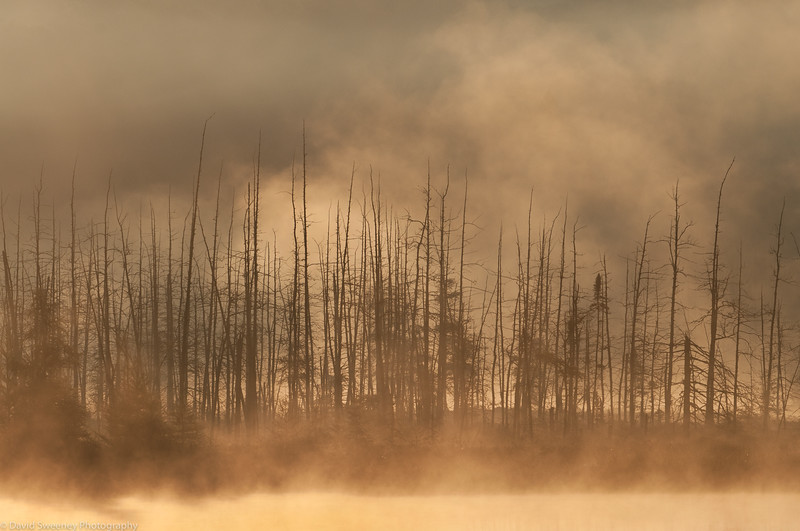 Archers Marsh Morning Mist.jpg