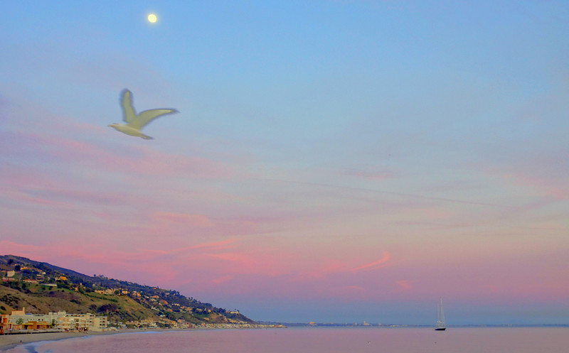 HDR Socal Malibu Landscapes: A ghosted Seagull!