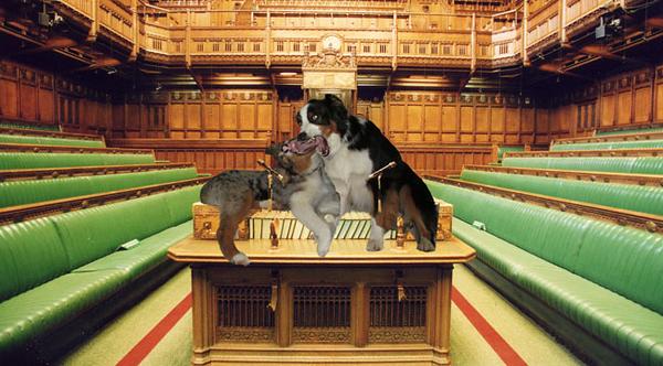 Parliament.GW_650x360.jpg