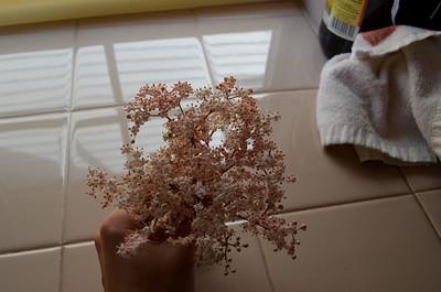 Elderflowers - April 2012