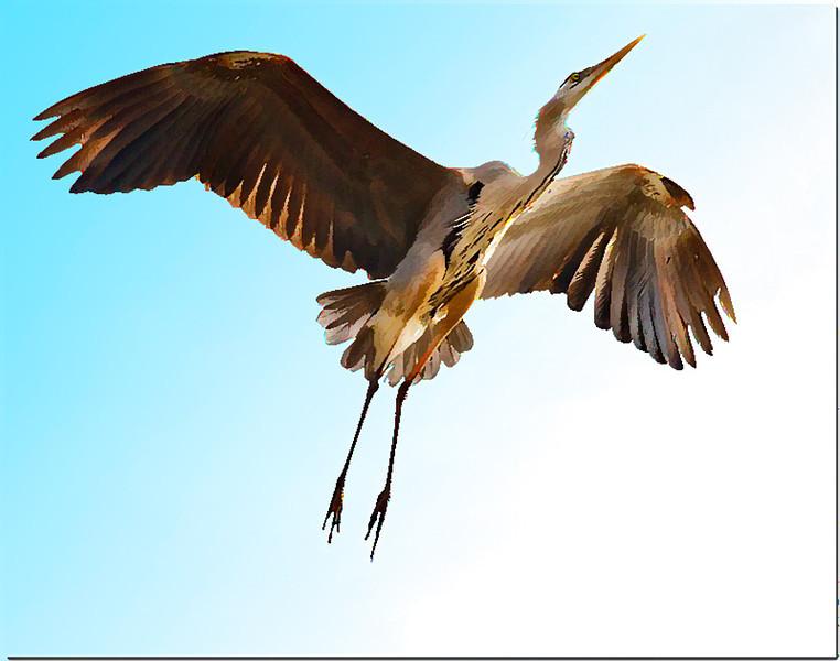 Birdsofcheval2simplify.jpg