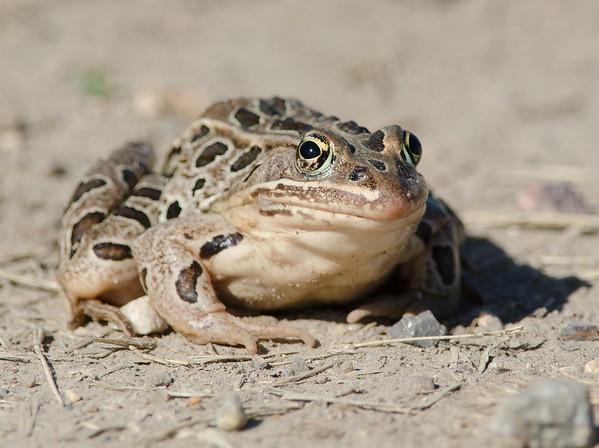 Reptiles/Amphibs
