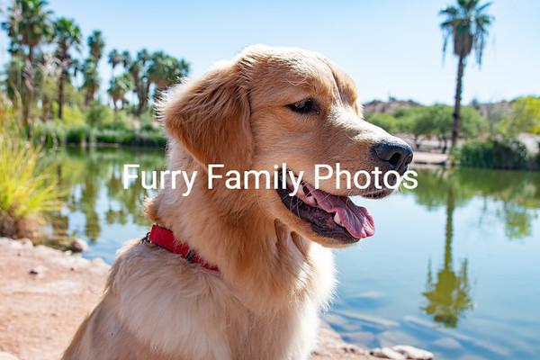 Emmie Puppy Shoot 2
