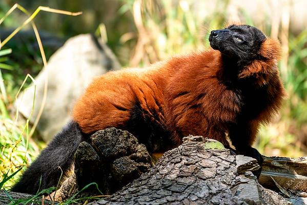 2021-07-23 - Woodland Park Zoo