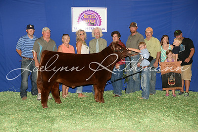 Steer Backdrop