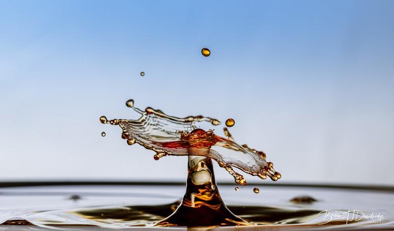 Splash-Art-Orange-1525.jpg