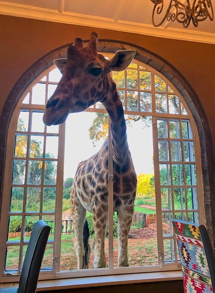 Breakfast, Giraffe Manor. Karen, Nairobi