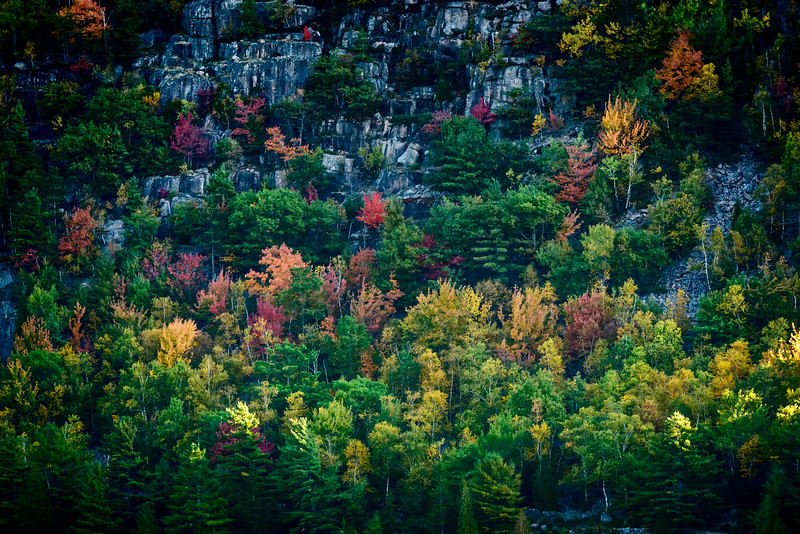 Maine-8781.jpg