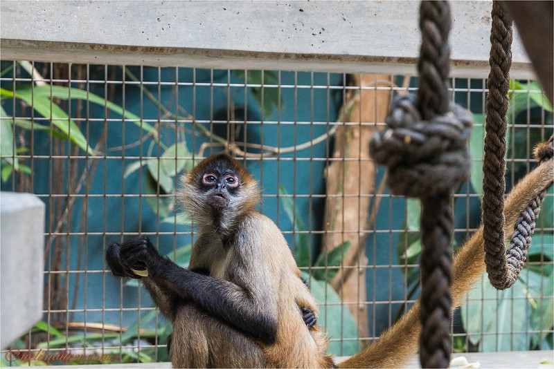 2017-11-16 Zoo Basel - IMG_3196.jpg