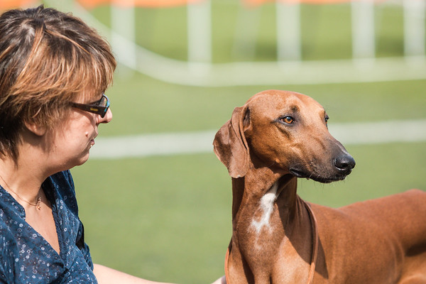 24 September 2017 Sighthound Club of Greece - 1st Specialty CAC Show