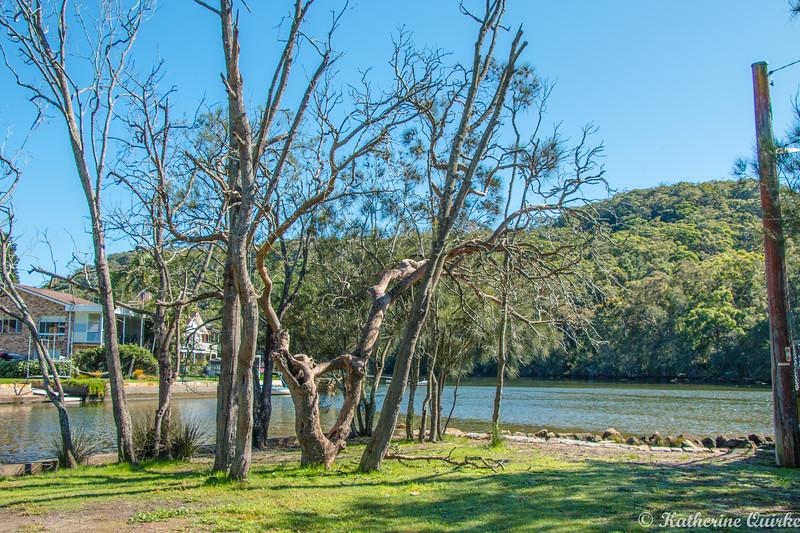woronora river trees.jpg