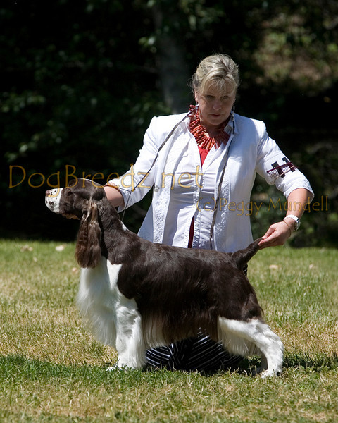 GCESSA Specialty - Bred By Exhibitor Dogs