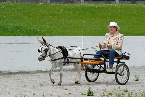 Tennessee Donkey Association