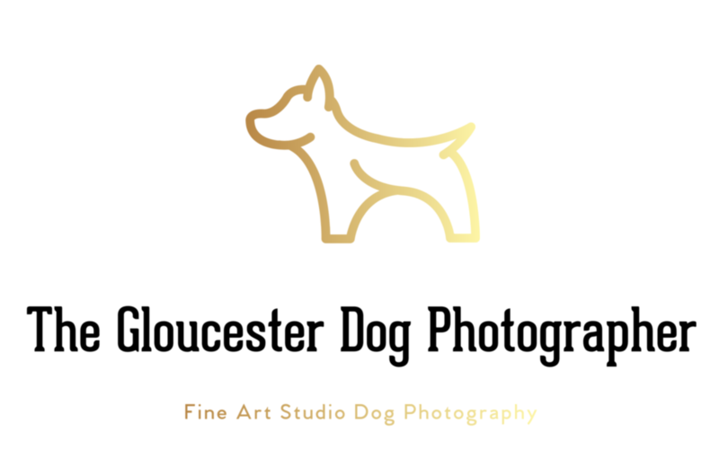 Gloucester Dog Photographer