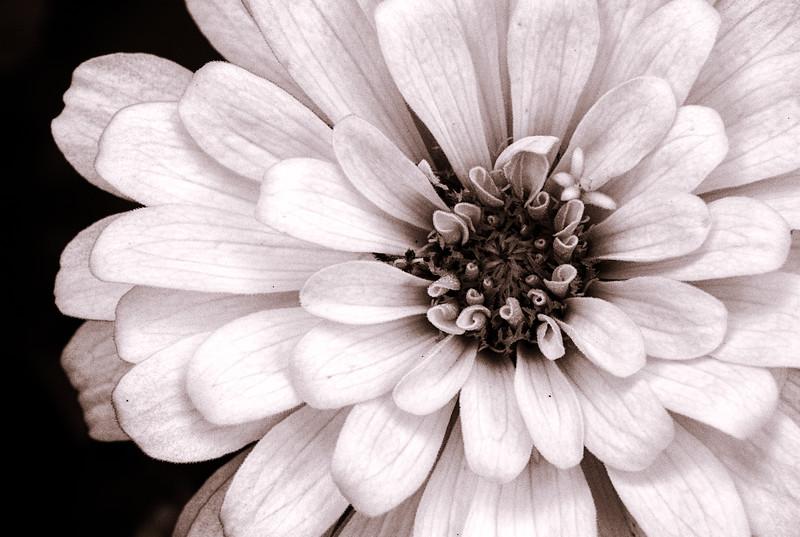 flora 091014-2.jpg