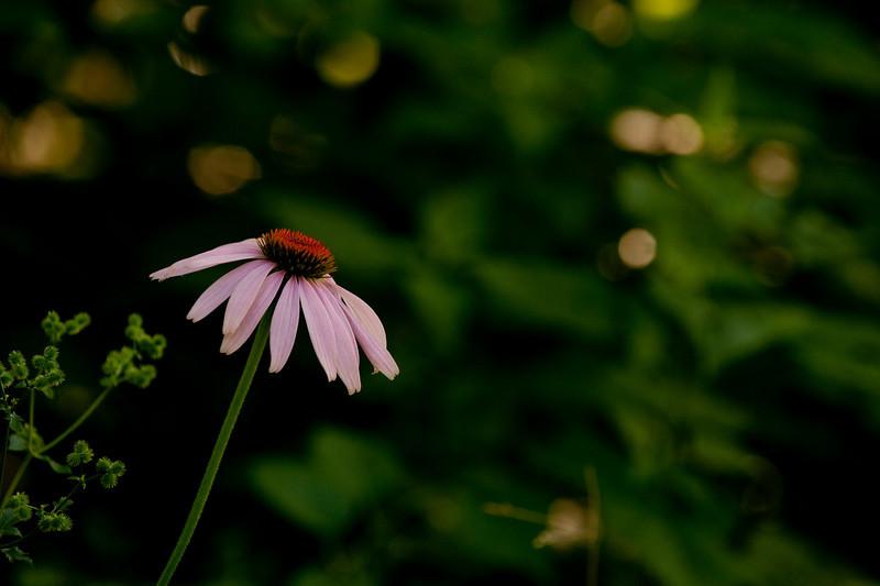 clip-015-flower-wdsm-09jul10-5868.jpg
