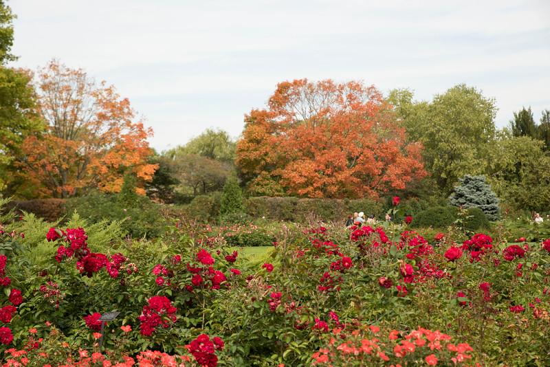 Chicago Botanic Garden 071.jpg
