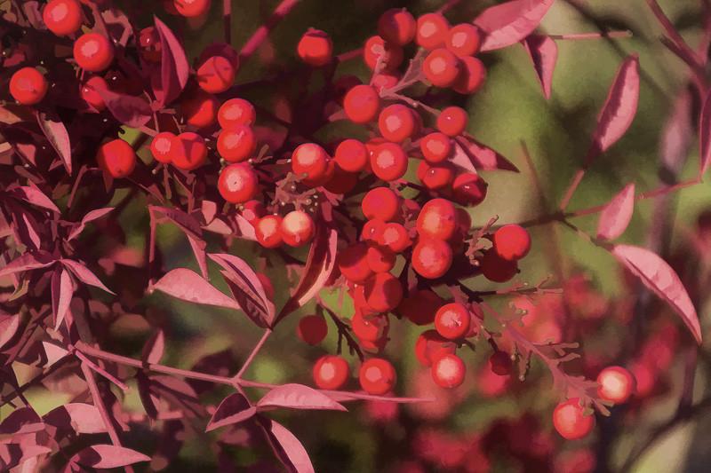 jan 4 - leaves and berries.jpg