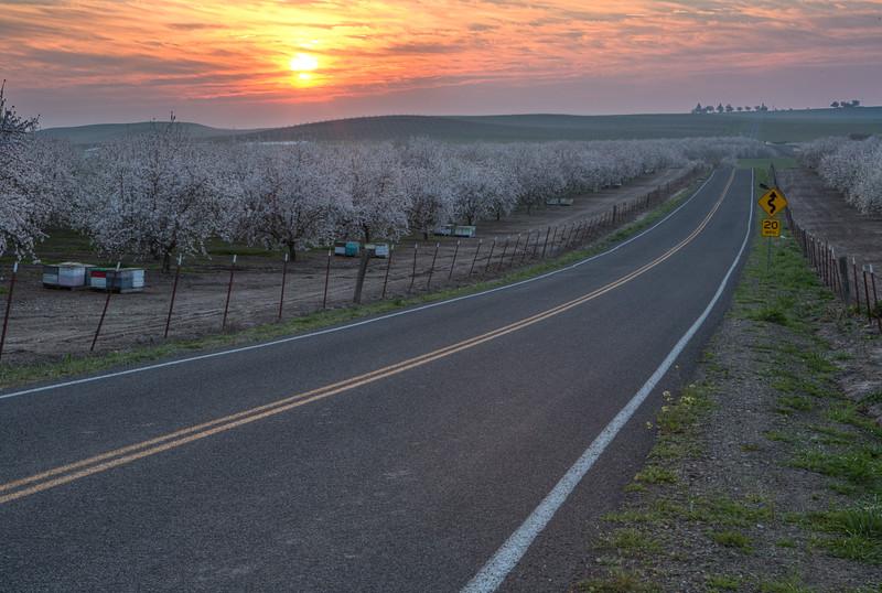 _BD_9531_orchard_sunset.jpg