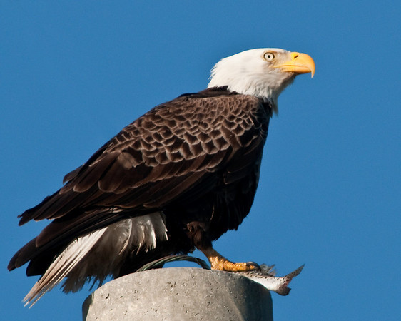 Palm Bay Eagle's Nest - Feb 8, 2010