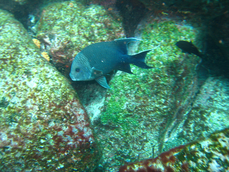 Diving in the Galapagos (339 of 392)