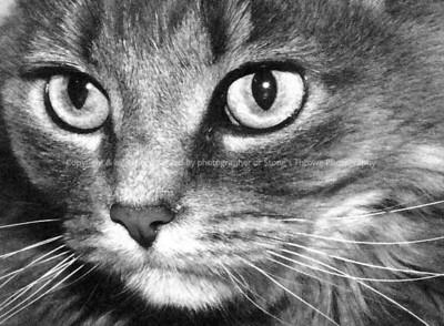 023-gray_cat-dsm-22dec05-4238