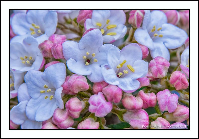 Rohrbaugh Photography Flowers 89.jpg