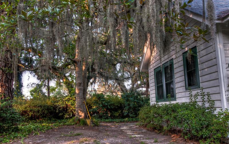 mossy-tree-house.jpg