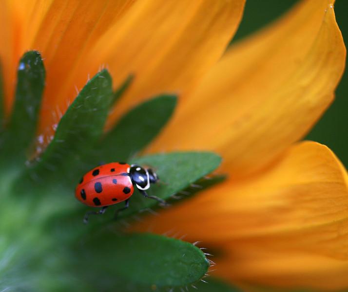 lady bug 9.jpg