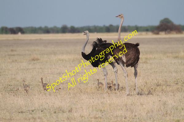 Botswana Nxai Pan