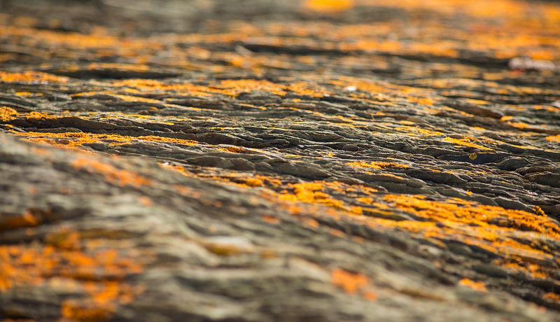 NRenaud-15-orange.jpg