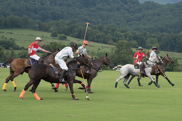 Polo  at King Family Vinyards