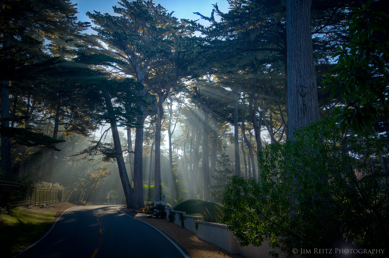 Beautiful rays though the cypress trees, as the morning fog lifts along 17-Mile Drive.