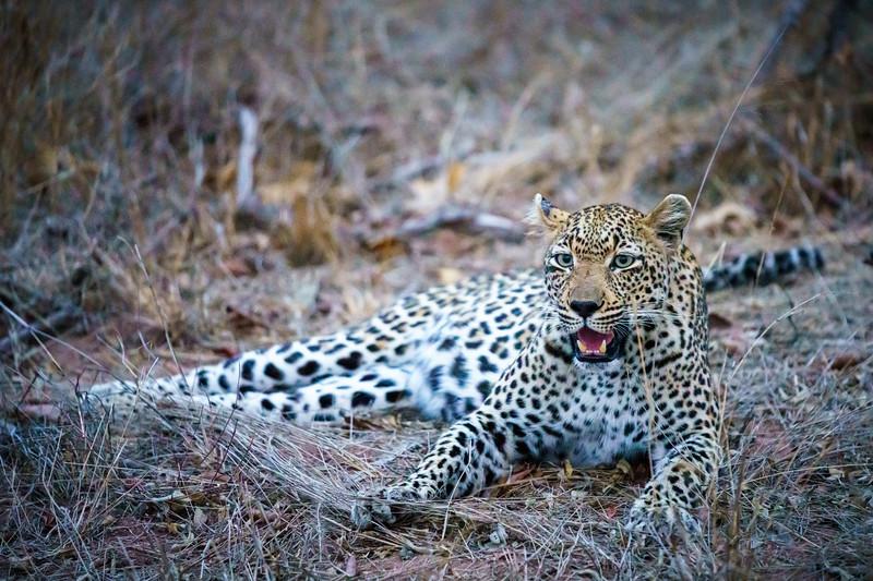 LeopardHills-20191027-0059.jpg