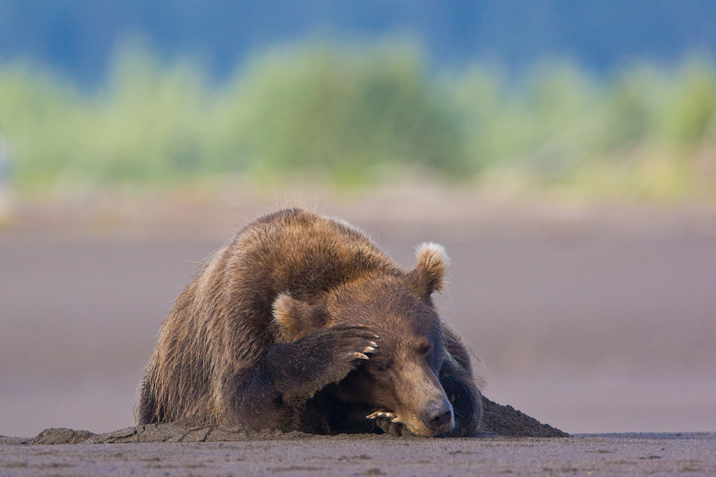 Sleeping Bear 20x30.jpg