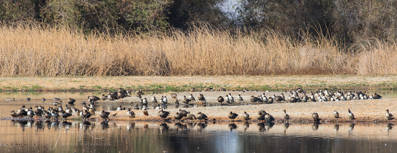 2015 Colusa Wildlife Refuge and Fields South of Chico