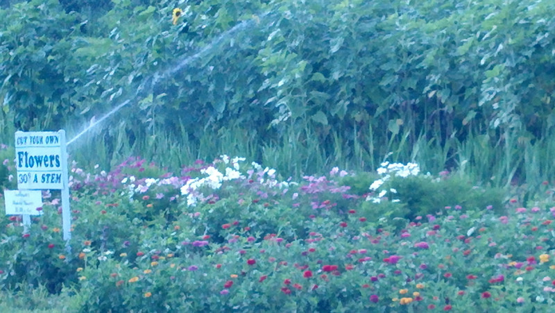 U-Pick flowers at Sunnycrest